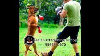 Saajan Dog Training School Pala 09961310970