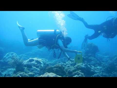 Welcome to Perhentian Marine Research Station