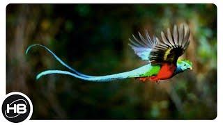 10 Птиц с Самыми Длинными Хвостами