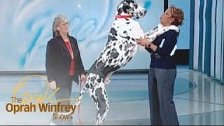 A Look at Amazing Animals on The Oprah Show | The Oprah Winfrey Show | Oprah Winfrey Network
