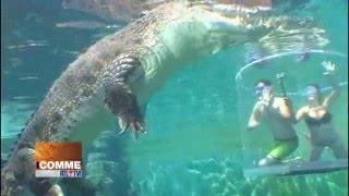 Nager avec des crocos : la cage de la mort à Darwin (Australie)