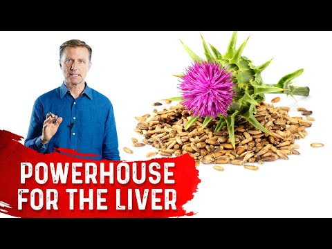 Silymarin in Milk Thistle is a Powerhouse for the Liver