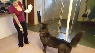 Wolfdog Tricks