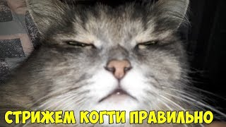 Как безболезненно подстричь когти и шерсть на подушечках лапок кошке