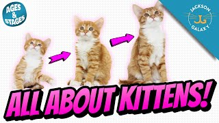 All About Kittens: Kitten Growth Stages & Milestones!