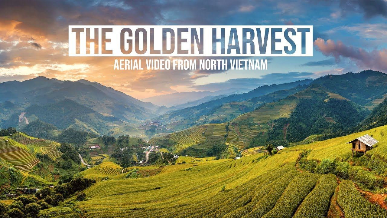 The Golden Harvest - 4K Aerial Video from North Vietnam