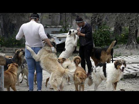 فيديو: كلاب لبنان.. الشارع مأواهم والذريعة الخوف من فيروس كورونا…  - نشر قبل 6 ساعة
