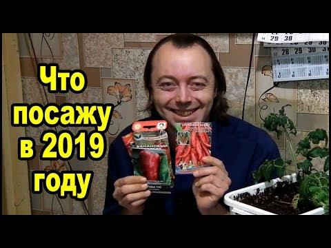 Семена 2019 и