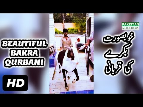 Beautiful Bakra Qurbani at Bakra Eid 2017   Eid ul Adha Beautiful Bakra Qurbani in Pakistan 2017 HD