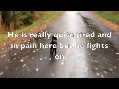 Hip Dysplasia - Dog