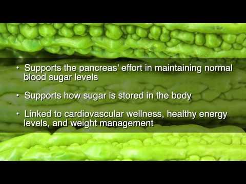 ampalaya nombre científico momordica charantia diabetes