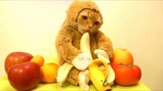Видео приколы про котов, новые приколы про кошек