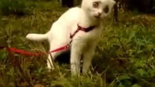 Кошка.глаза!!!.mp4