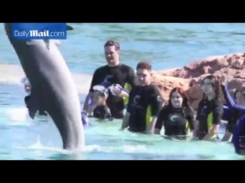 Ariel Winter looks a little nervous as she swims with dolphins in the Bahamas   Daily Mail Online