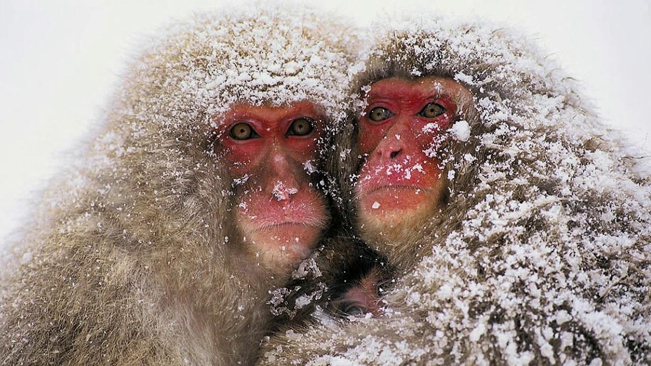 Очень холодно открытка