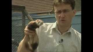 Ferrets And Ferreting - With Simon Whitehead (trailer For Dvd)
