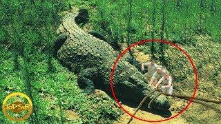 10 จระเข้ยักษ์ขนาดใหญ่ที่มีการบันทึกไว้ แค่ไกรทองเห็นยังต้องวิ่งหนี (มันใหญ่มาก!!)