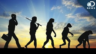 Is It Possible For Evolution To Reverse?