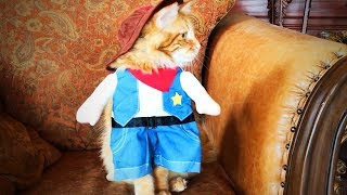 Cute Animals in Costumes 😍😱 Funny Animals Wearing Costumes (Part 1) [Funny Pets]