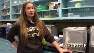 Purdue Agriculture Research: Forensic Entomology