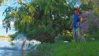 ВОТ ТАК ВСТРЕЧА НА АХТУБЕ Ловля сазана на жмых Бонусный сомик Рыбалка в Астрахани 2021