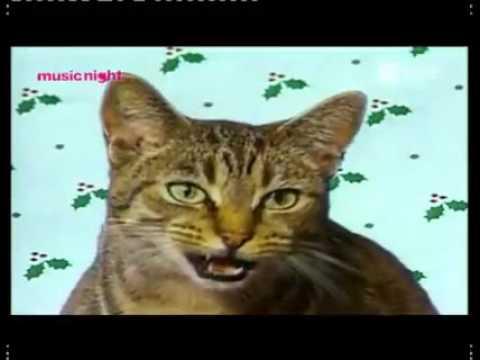 Cats singing silent night