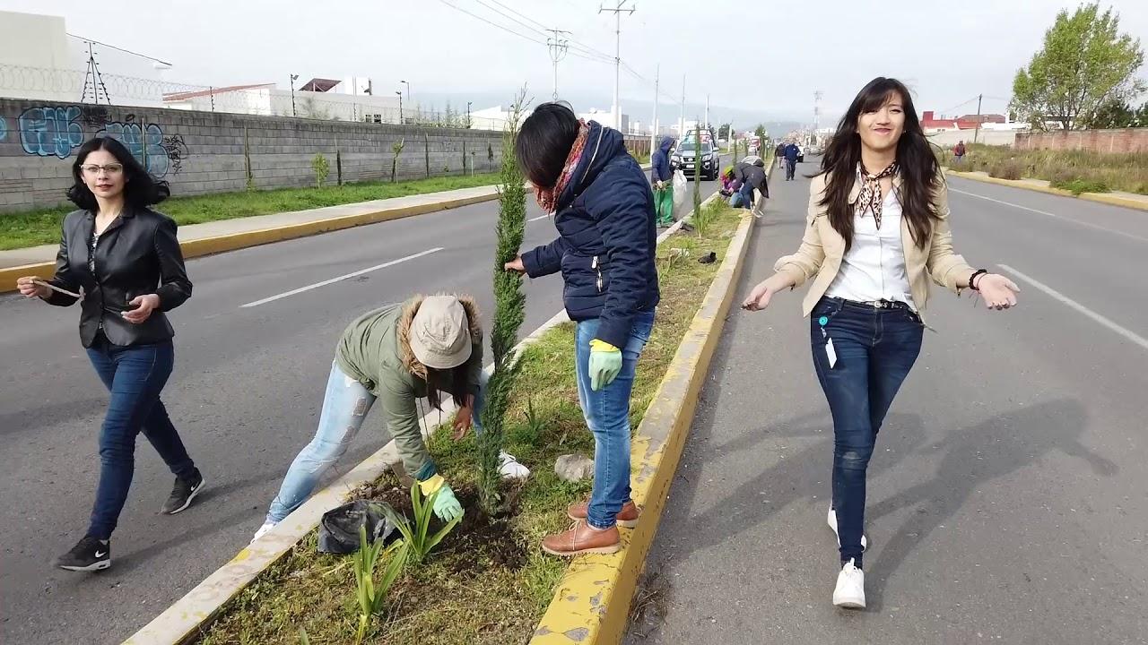 reforestando