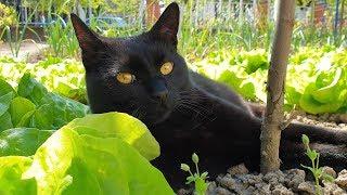 Relaxing Cat Video 43