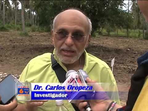 Grupo Navarrete y Asociados pretende renovar 2000 hectáreas de palmeras