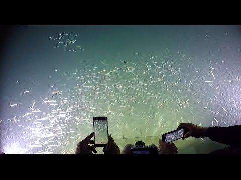 Salish Sea Wild: Voyage to the Bottom of the Salish Sea