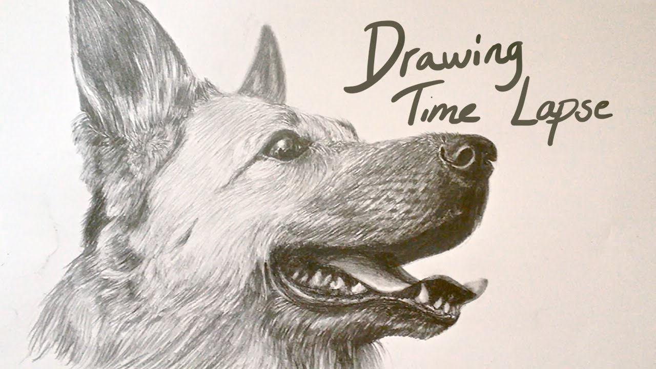 Drawing Time Lapse German Shepherd Youtube - German-shepherd-drawings