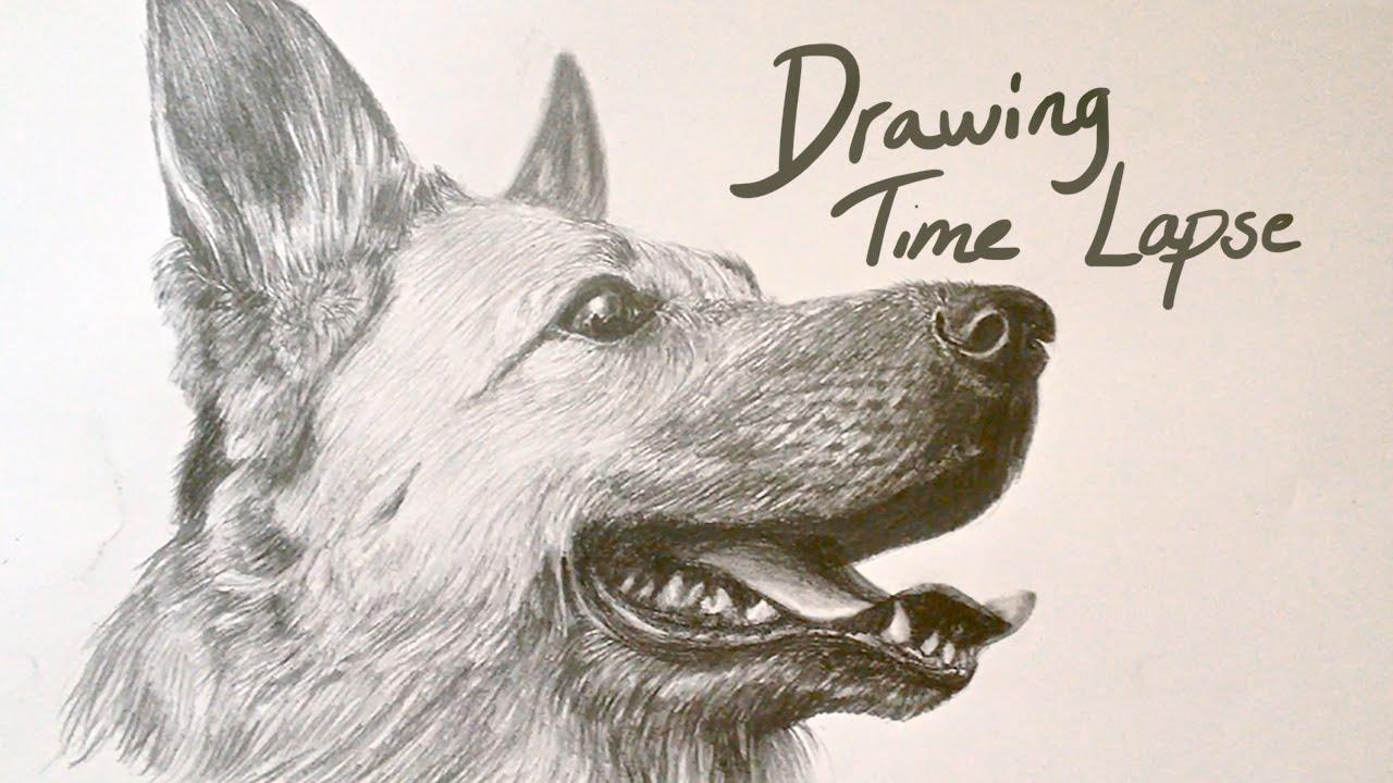 Drawing time lapse german shepherd youtube ccuart Choice Image