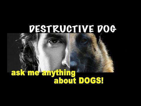 How To Get Dog to Not Be Destructive -  Robert Cabral Dog Training Video