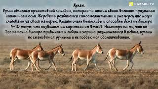 Животные из Красной книги