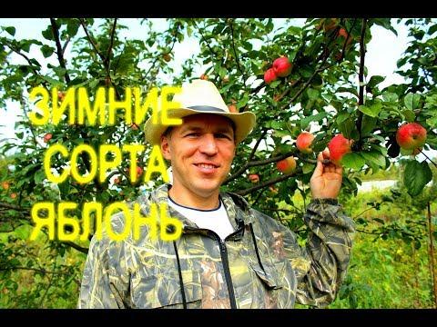 ОБЗОР//ЗИМНИЕ СОРТА ЯБЛОНЬ//МОЯ ЛЮБИМАЯ УСАДЬБА | описание | саженцы | саженец | яблоня | яблонь | яблоко | урожая | урожай | огород | купить