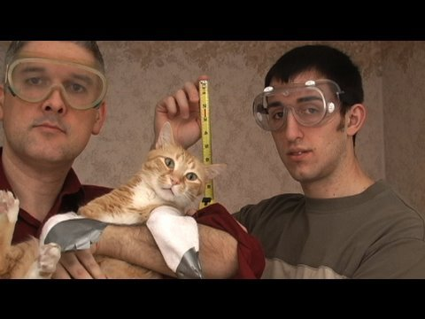 An Engineer's Guide to Cat Yodeling (with Cat Polka)