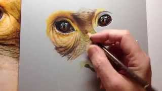 Photorealistic Speed Drawing of an Orangutan