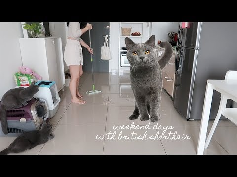 Weekend Days with British Shorthair Cats ⎮ Vlog 33