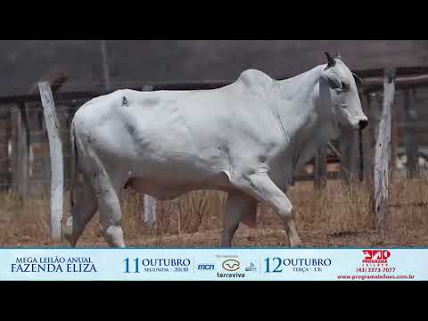 LOTE 238