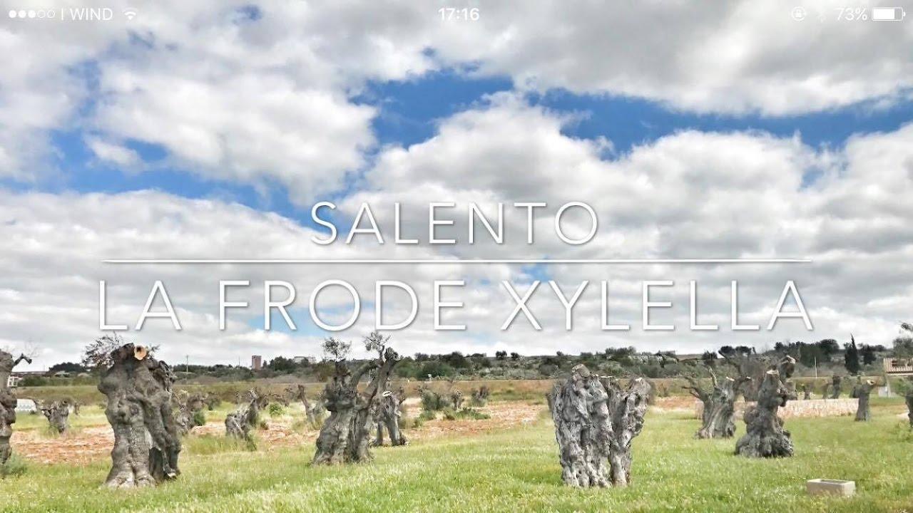 La Frode Xylella e la distruzione degli Ulivi in Salento: Intervista a Luigi Russo