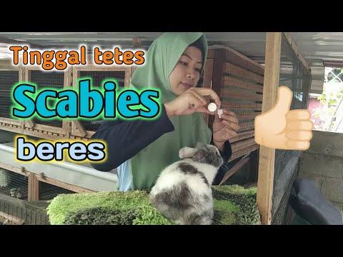 cara-mudah-mengobati-scabies-kelinci-tanpa-suntik