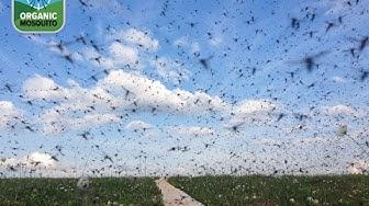 Mosquito Yard Treatment Raleigh NC