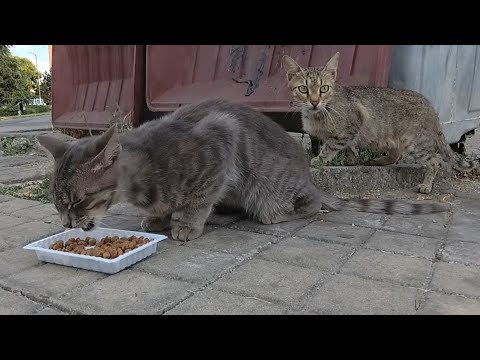 Scared cats feeding from the trash cans