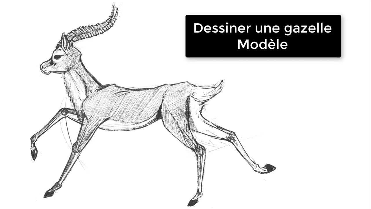 Dessiner Une Gazelle Modele Youtube