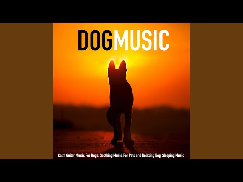 Music for Dogs and Relaxing Guitar