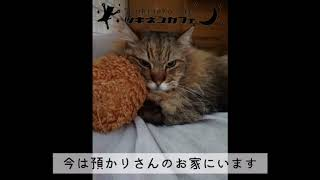 永年預かりのおすすめ『亀の子たわし編』