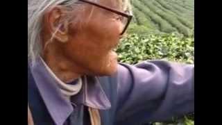 Happy 88 year old woman picking tea, Hangzhou, Zhejiang, China