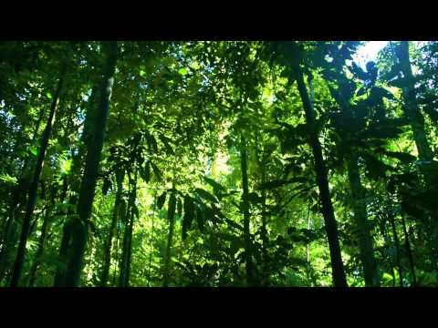 Tropical Rainforest Climate (Geo Project) 2015