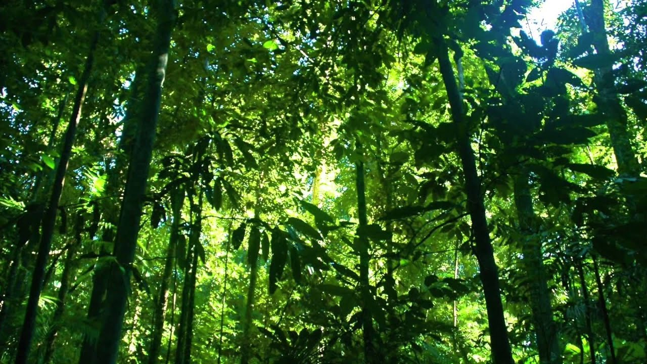 Tropical Rainforest Climate (Geo Project) 2015 - YouTube