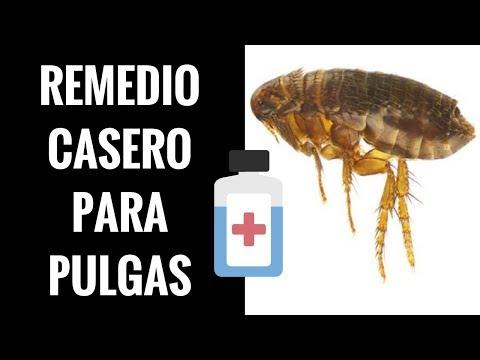 Remedios caseros para las pulgas en perros y gatos jos - Remedios caseros para las pulgas en casa ...